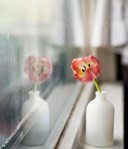 Så blir dina fönster skinande rena