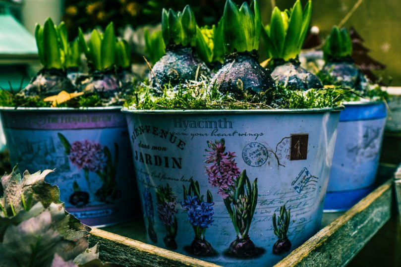 agriculture-beautiful-botanical-776267